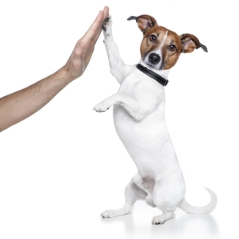 Dog with male hand and high five